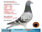 TR20-012693 DİŞİ / 132. FİNAL 518 KM OLR KALİMANCİ 2020 GABY - ŞABLON
