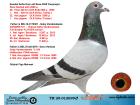 TR20-012699 ERKEK / GABY % 100 - 26. FİNAL 420 KM OLR SOFİA 2020