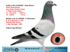 TR20-012713 ERKEK / ORJ FİGO MEHMET - KEES BOSUA - A.& H. REYNAERT