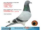 TR20-012735 ERKEK / BABASI DE RIJCK WALTER ANNESİ DE RAUW-SABLON