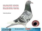 TR20-012740 ERKEK / DE RIJCK WALTER % 100