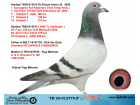 TR20-012775 ERKEK / VAN DYCK - REYNAERT / KARDEŞİ FİNAL 20. MANİSA 45