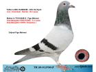 TR20-012780 ERKEK / DIRK VAN DYCK ANNESI KING KONG TORUNU & CHEN KOOPMAN