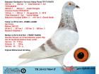 TR20-017064 ERKEK / BABASI IGO FRANS 106 GTI OGLU - ANNESİ FİKRET BARIS