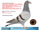 TR20-017115 DİŞİ / ANNESİNİ YARI KARDEŞİ DEMBA BA ANNESİ SABLON