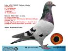 TR20-017118 DİŞİ / BABASI SUPERSTAR FINAL 57 ANNESİNİN KARDEŞİ DEMBA BA