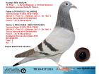 TR20-017123 DİŞİ / KARDEŞİ REİS DERBY16 FİNAL 12 AS KLASMAN 3.