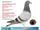 TR20-017142 ERKEK / BABADAN KARDEŞİ 155 KM 2. ANNESİNİN KARDEŞİ YARI FİNAL 1