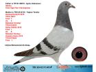 TR20-017145 ERKEK / BABASI ŞABLON ANNESİNİN KARDEŞİ FİNAL 7 AS 2