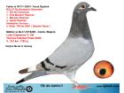 TR20-020017 DİŞİ / BABASININ KARDEŞİ BULUS ORTA & MARATON ŞAİMPİYONU ANNE LUDO