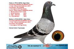 TR20-020527 DİŞİ /  INBREED MISTER KALIMANCI 2 KARDESTEN CIKMA