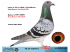TR20-020568 DİŞİ /KEES BOSUA - VAN DYCK