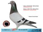 TR20-029870 ERKEK / VAN DYCK % 75 VAN LOON % 25