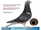 TR20-034377 ERKEK / MACHIEL BUIJK % 100 DOLLE AARDEN