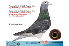 TR20-034454 ERKEK / MACHIEL BUIJK DOLLE AARDEN % 100