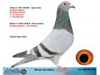 TR20-051005 DİŞİ / BABASI DE RAUW SABLON - ANNESİ SABLON - T. DEIGNER