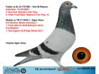 TR20-051068 ERKEK / BABASININ YARI KARDESİ 3. ACE ANNE KARDEŞİ MISTER KALİMANCİ