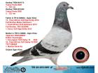 TR20-051089 ERKEK / BABASI 13 FINAL EGE DERBY MISTER KALIMANCI KARDESI - ANNESI YEGENI DERBY16 AS SAMPIYONU