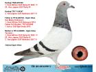 TR20-051099 DİŞİ / DIREK KARDESI DEBY16 FİNAL SAMPIYONU !!!