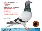 TR20-051102 DİŞİ / BABASI 2. AS GÜVR. ANNESİ GABY DE KLAK 3 AS GÜV.