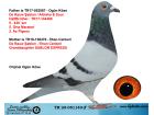 TR20-051140 ERKEK / DE RAUW ŞABLON