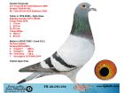 TR20-051154 ERKEK / KENDİSİ KALİMANCİ FİNAL 427. 518 KM 2020