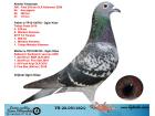 TR20-051162 DİŞİ / KENDİSİ KALİMANCİ FİNAL 368. 518 KM 2020