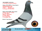 TR20-051556 DİŞİ / TAM KARDEŞİ 2. FİNAL 508 KM BEST OF İSTANBUL 2020