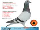 TR20-051557 ERKEK / TAM KARDEŞİ 2. FİNAL 508 KM BEST OF İSTANBUL 2020