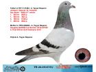 TR20-051675 DİŞİ / JANSSEN - DESMET - CAMPİUS