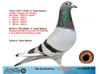 TR20-051676 DİŞİ / JANSSEN - DESMET - B. CAMPİUS