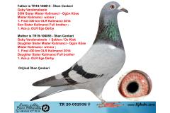 TR20-052938 DİŞİ / GABY / ŞABLON / DE KLAK - IBRED MISTER K. H. KRUGER