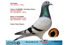 TR20-059114 ERKEK / HOK REIJNEN BOLTION % 100