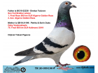 TR20-059190 ERKEK / BABASI DİMİTAR TODOROV ANNESİ 75. FİNAL 505 KM