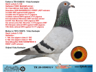 TR20-059851 DİŞİ / INBRED SON SHOWPIECE X FIRST LADY GERRIT LAHUIS % 100