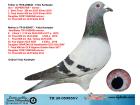 TR20-059855 DİŞİ / INBREED FIRST MADAM - SUPERSTAR & SPARTACUS KIZ TORUNU