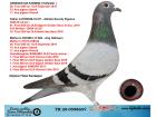 TR20-059860 DİŞİ / BABASI 61 FINAL ALGARVE GOLDEN RACE ANNESI ROMARIO TORUNU