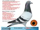TR20-059864 ERKEK / BABASI SPARTACUS OĞLU ANNESİ FIRST MADAM KIZI