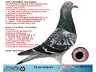 TR20-059865 DİŞİ / BABASI SPARTACUS OĞLU ANNESİ FIRST MADAM KIZI