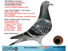 TR20-059866 DİŞİ / HOUBEN % 100 KIZ KARDESI 158. FINAL OLR SOFIA 2018
