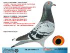 TR20-059871 DİŞİ / BABASININ KARDEŞİ 3 FİNAL TURKGUCUERMEYDANI ANNESI BARON KIZI