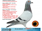 TR20-059883 DİŞİ / ANNEDEN KARDES 18. FİNAL OLR DERBY16 BABASI HEINZ MEIER % 100