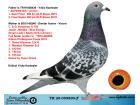 TR20-059890 ERKEK / BABASI SUPERSTAR 1 SEMI FINAL 2. FINAL ANNESI KOOPMAN % 100