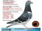 TR20-059895 ERKEK / HOUBEN % 100 KIZ KARDESI 158. FINAL OLR SOFIA 2018