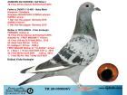 TR20-059898 DİŞİ / ANNEDEN KARDES 18. FİNAL OLR DERBY16 BABASI HEINZ MEIER % 100