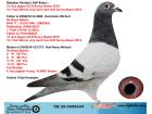 TR20-059963 ERKEK / DE RAUW SABLON % 100 BABADAN KARDESI 12. ACE OLR SUNNY BEACH