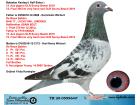 TR20-059964 ERKEK / DE RAUW SABLON % 100 BABADAN KARDES 12 ACE GUV.