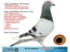 TR20-059965 DİŞİ / BABASI SUPERSTAR 1 SEMI FINAL 2. FINAL ANNESI KOOPMAN % 100