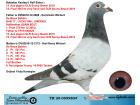 TR20-059980 ERKEK / DE RAUW SABLON % 100 BABADAN KARDES 12 ACE GUV.