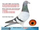 TR20-152016 DİŞİ / BABASI 3. FİNAL 550 KM ANNESİ 17. FİNAL 500 KM KIRKPINAR